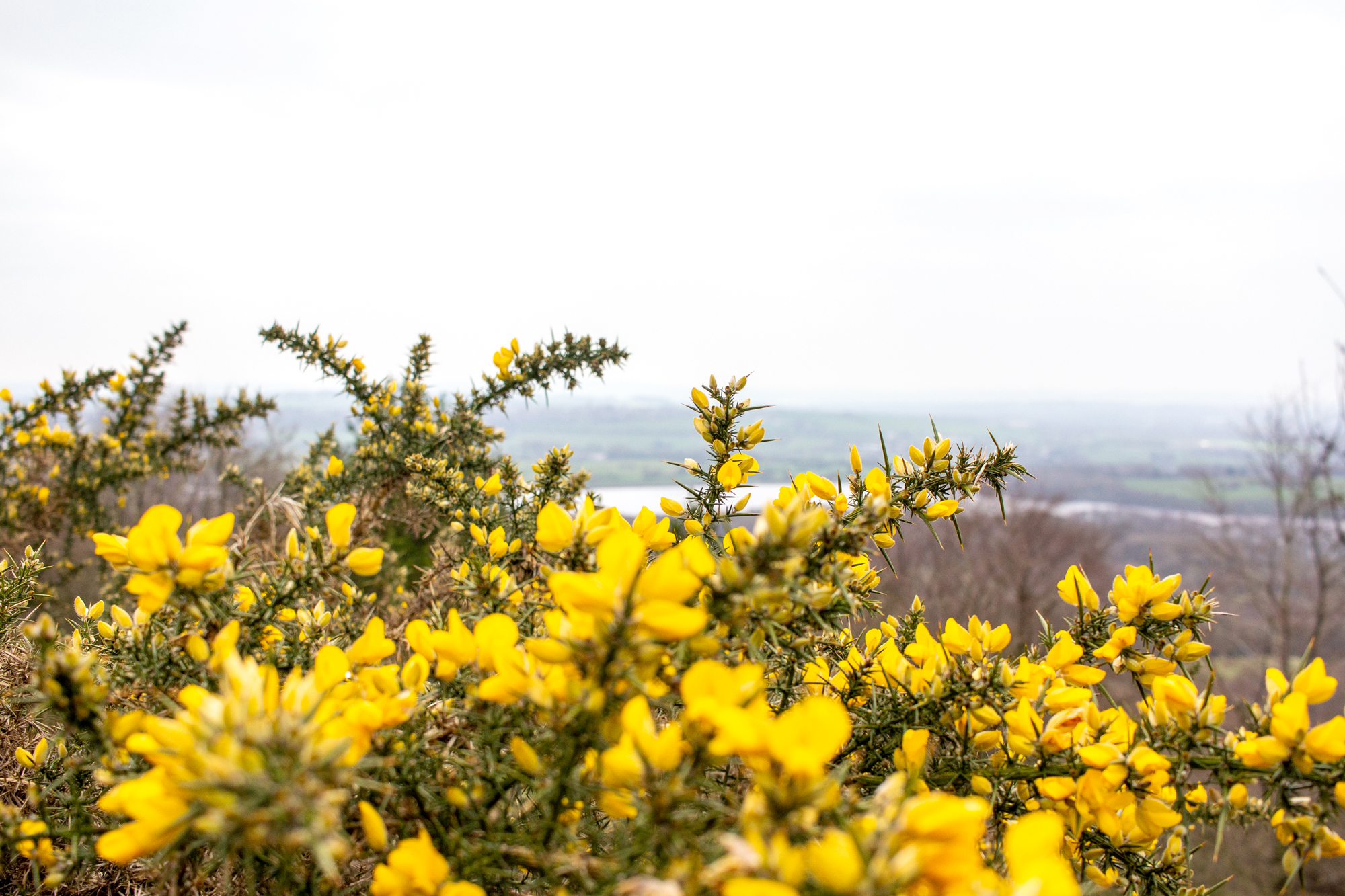 Yellow Flowers Landscape | Getting Outside And Keeping It Real | awaywithkatie.com