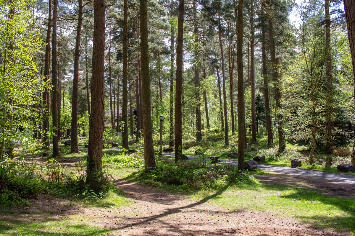 5 Things To Expect at Center Parcs Whinfell Forest | View of Trees and Paths | awaywithkatie.com