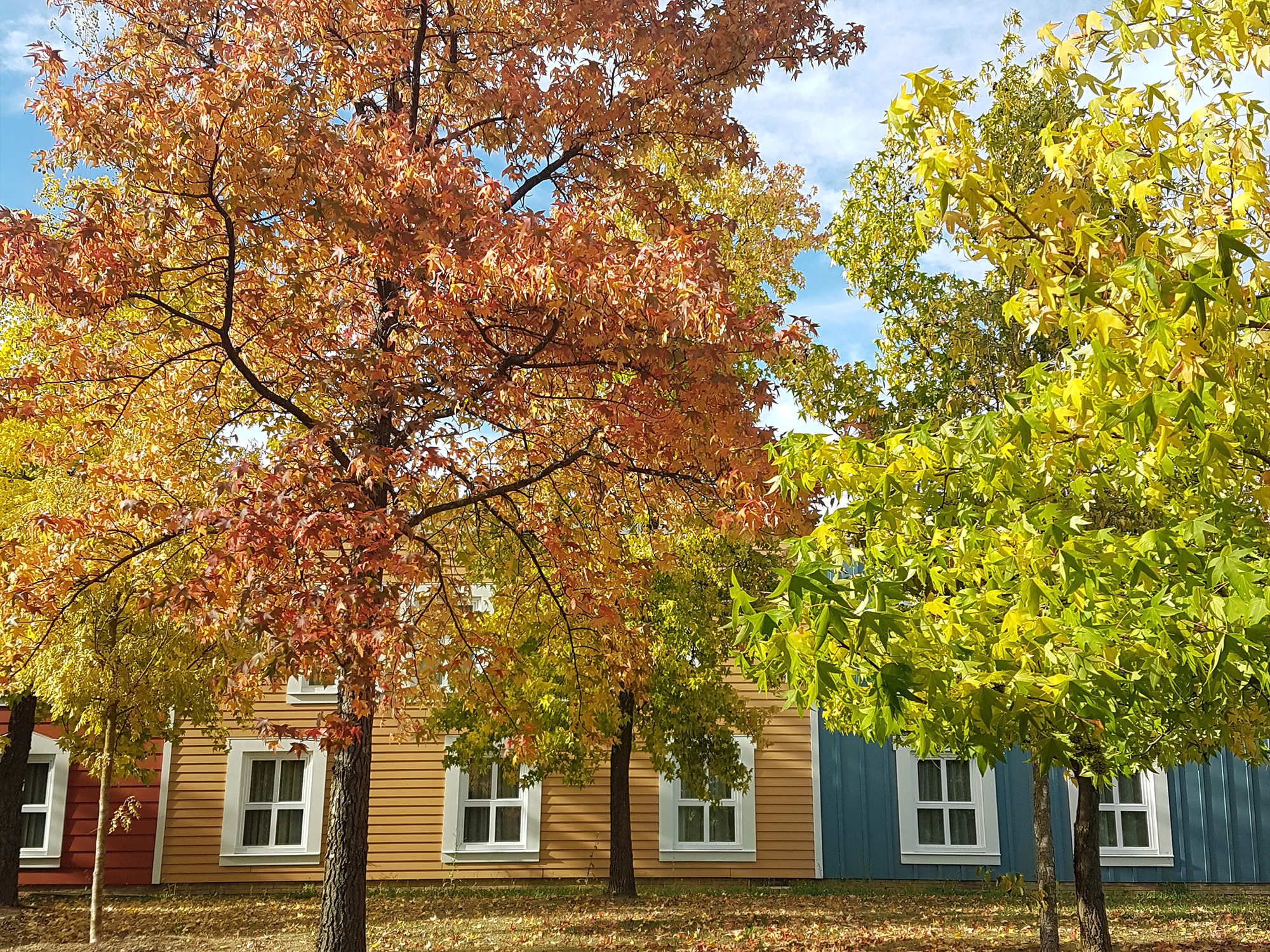 Autumn colours on trees outsides colourful buildings | The third quarter